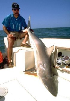 Galveston Shark Fishing.....FANTASTIC!